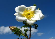 Fleur sur le ciel Photographie stock libre de droits