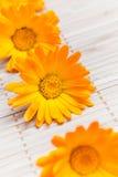 Fleur sur le couvre-tapis en bambou Images libres de droits