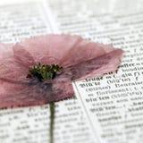 Fleur sur le dictionnaire photos libres de droits