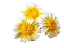 Fleur sur le fond blanc photo stock