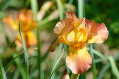 Fleur sur le fond blured Photos stock