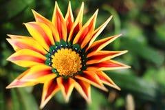 Fleur sur le fond brouillé de nature Images stock