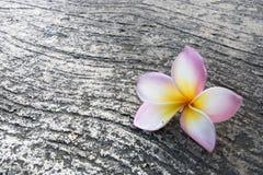 Fleur sur le fond de plancher Photos stock