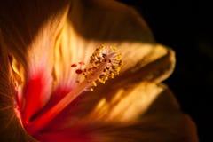 Fleur sur le fond foncé Images libres de droits