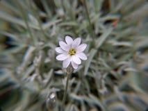 Fleur sur le fond vert photographie stock libre de droits
