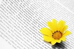 Fleur sur le livre Photos stock