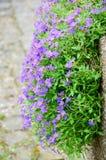 Fleur sur le mur Photo libre de droits