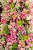 Fleur sur le mur de contextes Image stock