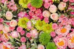 Fleur sur le mur de contextes Photographie stock libre de droits