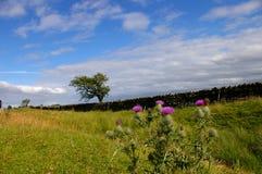 Fleur sur le mur de Hadrian Images libres de droits
