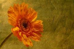 Fleur sur le papier Photos libres de droits