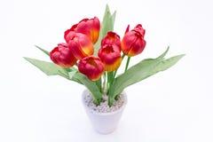 Fleur sur le pot Images stock