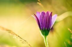 Fleur sur le pré d'été photos stock