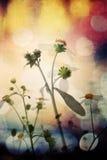 Fleur sur le rétro fond Photos stock