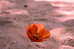 Fleur sur le sable Photo libre de droits