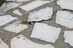 Fleur sur le trottoir Photos libres de droits