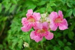 Fleur sur le vert en Thaïlande Images stock