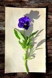 Fleur sur le vieux papier photo libre de droits