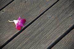Fleur sur les planches en bois Photo libre de droits
