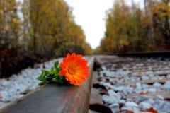 Fleur sur un acier Images stock