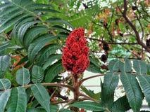 Fleur sur un arbre Photographie stock