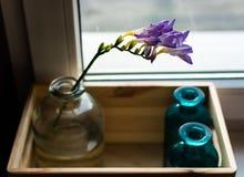 Fleur sur un carreau de fenêtres Image libre de droits