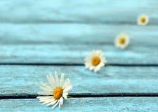 Fleur sur un fond bleu Images libres de droits