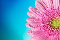 Fleur sur un fond bleu image libre de droits