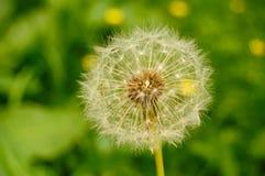 Fleur sur un fond coloré Image stock
