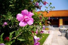 Fleur sur un fond du temple chinois. Photographie stock libre de droits