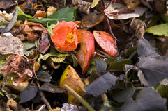 Fleur sur un segment de mémoire de compost Image stock
