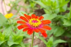 Fleur sur une fin verte de fond  Images stock