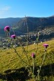 Fleur sur Vranica Image stock