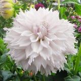Fleur tendre Photos stock