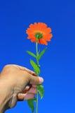 Fleur tenue dans la main Photographie stock libre de droits