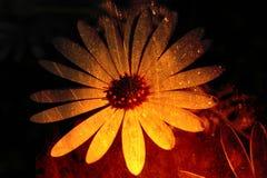 Fleur texturisée image stock