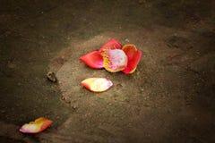 Fleur tombée Photographie stock