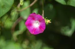 Fleur très belle Photos stock