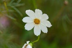 Fleur très belle Image libre de droits