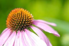 Fleur triste Photographie stock