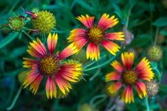 Fleur trois couvrante Photographie stock