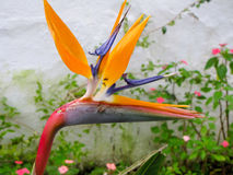 Fleur tropicale Photo libre de droits