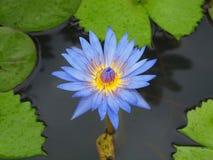 Fleur tropicale Photographie stock