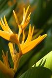 Fleur tropicale Image stock