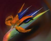 Fleur tropicale Image libre de droits