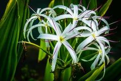 Fleur tropicale 2 Photo libre de droits