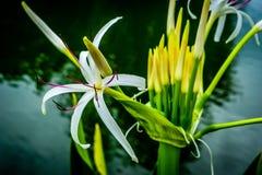 Fleur tropicale 3 Photo libre de droits