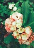 Fleur tropicale Images libres de droits