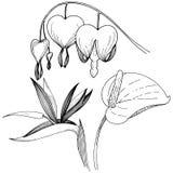 Fleur tropicale dans un style de vecteur Élément d'isolement d'illustration Illustration de Vecteur