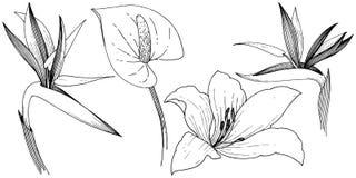 Fleur tropicale dans un style de vecteur Élément d'isolement d'illustration Illustration Libre de Droits